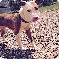 Adopt A Pet :: Lucy - South Windsor, CT