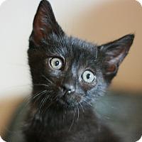 Adopt A Pet :: Eda - Canoga Park, CA