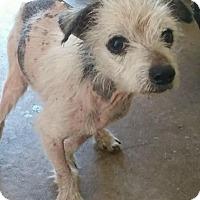 Adopt A Pet :: CASPER - Cadiz, OH