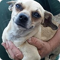 Adopt A Pet :: Babette - Gainesville, FL