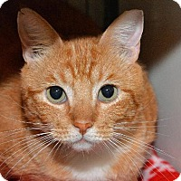Adopt A Pet :: Humphrey - Redwood City, CA