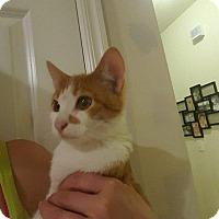 Adopt A Pet :: pumpkin - Aurora, CO