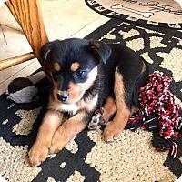 Adopt A Pet :: Greta - Memphis, TN