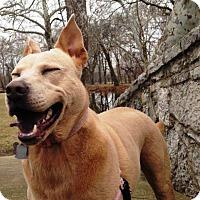 Adopt A Pet :: Luna - ADOPTED - Piqua, OH