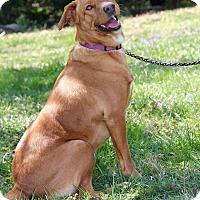Adopt A Pet :: Blossom - New Oxford, PA
