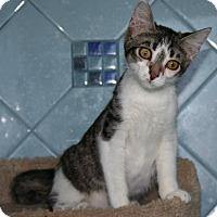 Adopt A Pet :: Daisy - Santa Rosa, CA