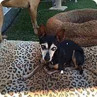 Adopt A Pet :: Stevie - Creston, CA