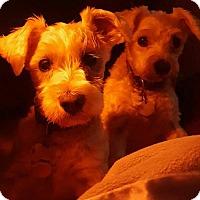 Adopt A Pet :: Joy and Sophie - Colorado Springs, CO