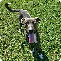 Adopt A Pet :: Bo Jack - Moberly, MO