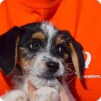 Adopt A Pet :: Alonzo 'Lon' Smith Jr - Brooklyn, NY
