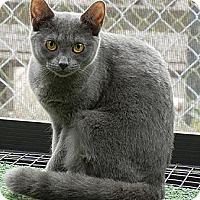 Adopt A Pet :: Mystic - Orlando, FL