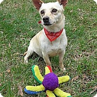 Adopt A Pet :: Jaycie - Mocksville, NC