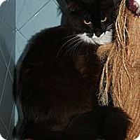 Adopt A Pet :: Mistletoe - Santa Rosa, CA
