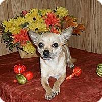 Adopt A Pet :: Sparkey - Chandlersville, OH