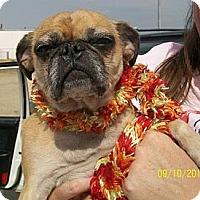 Adopt A Pet :: Mallory - Anaheim, CA