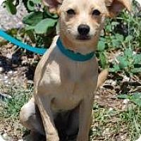 Adopt A Pet :: Portia - Bradenton, FL