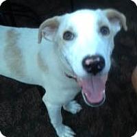 Adopt A Pet :: Tyler - Rye Brook, NY