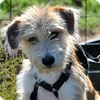 Adopt A Pet :: Manziel - Austin, TX