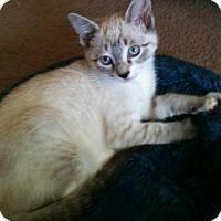 Adopt A Pet :: Amazing Grace - Davis, CA