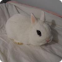 Adopt A Pet :: Gabrielle - Hillside, NJ