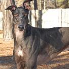 Adopt A Pet :: Ponda's Outcast