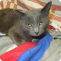 Adopt A Pet :: Elsa - Medina, OH