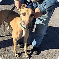 Adopt A Pet :: RPM Allison - Knoxville, TN