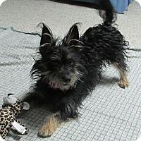 Adopt A Pet :: Matilda - Greeley, CO