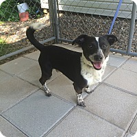 Adopt A Pet :: Max Pending Adoption - Manchester, CT