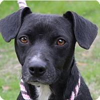 Adopt A Pet :: EMMY - Red Bluff, CA
