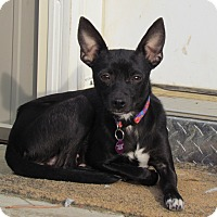 Adopt A Pet :: TINKERBELL - Bedminster, NJ
