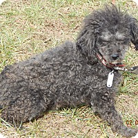 Adopt A Pet :: Chili Willie(12 lb)Needs Help! - Sussex, NJ