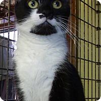 Adopt A Pet :: DALEEN - Acme, PA