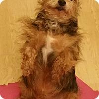 Adopt A Pet :: Wilbur - Turlock, CA