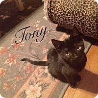 Adopt A Pet :: Tony - New Milford, CT