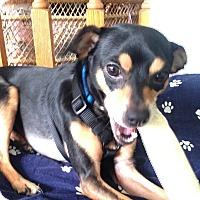 Adopt A Pet :: Reggie - Surrey, BC