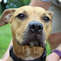 Adopt A Pet :: Sandy - Troy, MI
