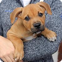 Adopt A Pet :: Betty - Harrison, NY