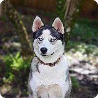 Adopt A Pet :: Luna - Jupiter, FL