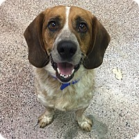 Adopt A Pet :: Roscoe - Kansas City, MO