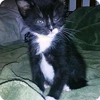 Adopt A Pet :: Bonnie - Hampton, VA