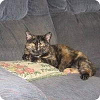 Adopt A Pet :: Tiki - Kirkwood, DE