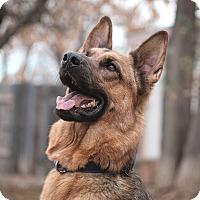 Adopt A Pet :: Theo - Denver, CO