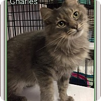 Adopt A Pet :: Charles - Atco, NJ