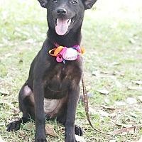 Adopt A Pet :: Paula - San Mateo, CA