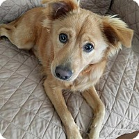 Adopt A Pet :: Callen - Burlingame, CA