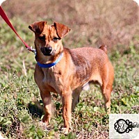 Adopt A Pet :: Tiny Tim - DeForest, WI