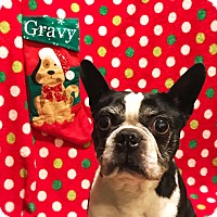 Adopt A Pet :: Pass the Gravy - Cleveland, OH