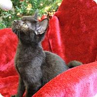 Adopt A Pet :: Manny - Greensboro, NC