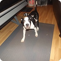 Adopt A Pet :: Dash - Quincy, IN